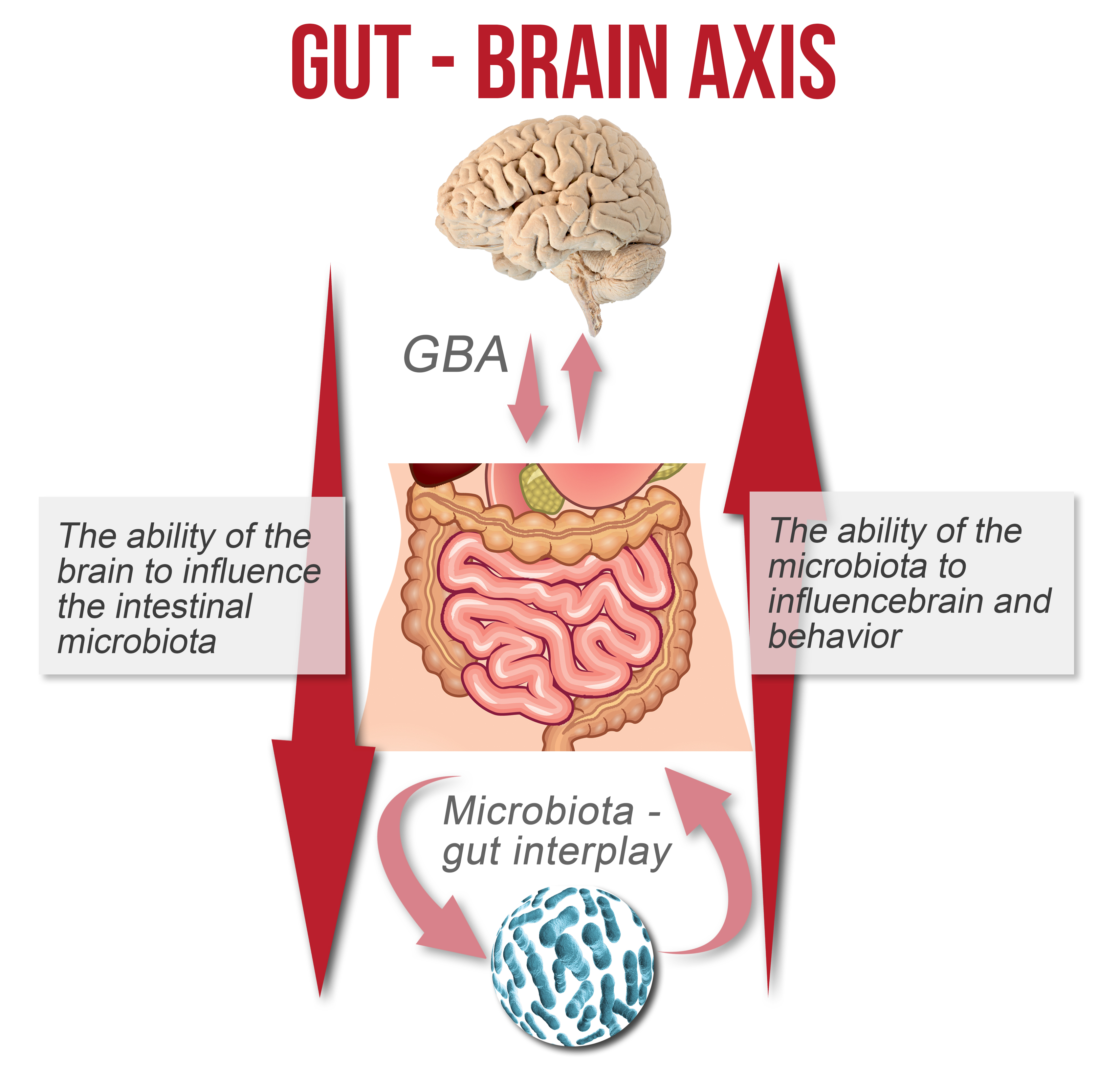 Foods Good For Your Gut Health